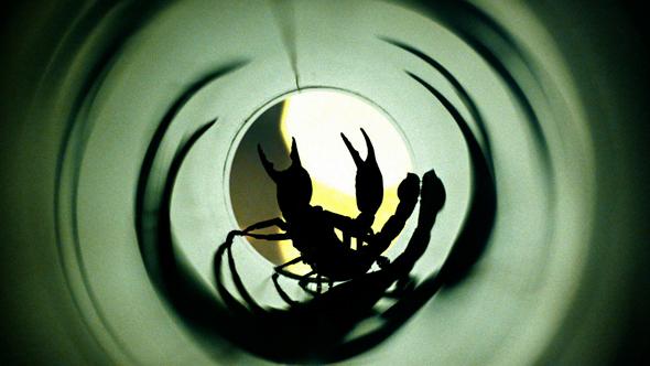 Ferstl_Fiat_Duel of the Scorpions_Web Thumb