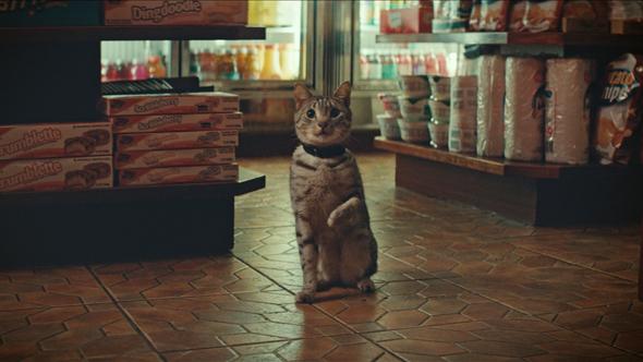 Masick_NY Lotto_Bodega Cat_Web Thumb